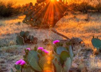 : Desert Bloom? Arizona's Economy Seeks its Place in the Sun