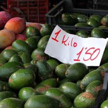 Mexican avocados the prince of fruits